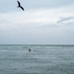 FUJI GFX50s, ocean, shark
